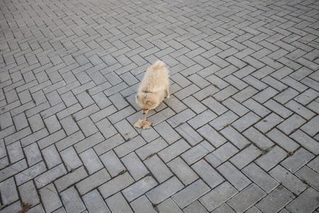 Spitz puppy walking on the walk. Walk in the park