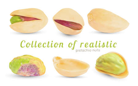 Vector realistic pistachio nuts with dry 3d shell. Иллюстрация