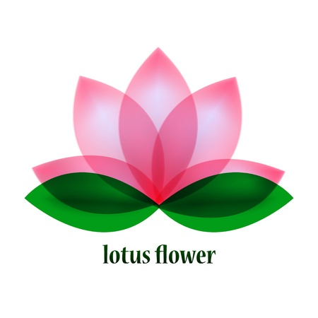 flor loto: Vector flor de loto