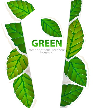 Vector green leaves brochure layout