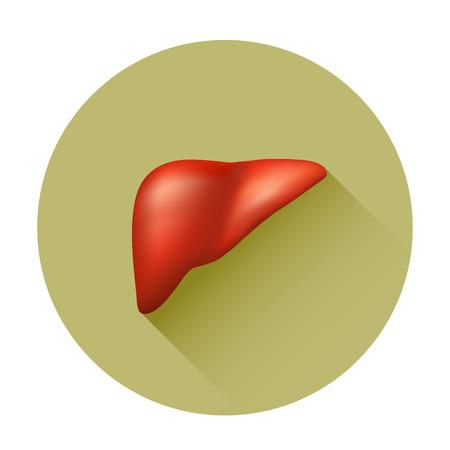 hepatic: Semi-realistic vector human liver