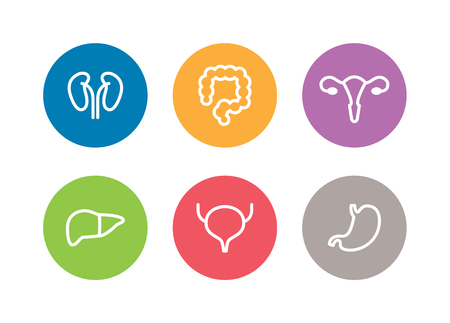 female large intestine: Vector human internal organs icons. Liver, kidneys, uterus, bladder, stomach and colon design