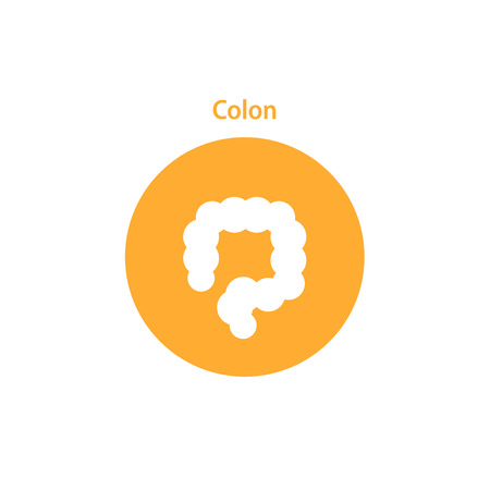 ascending colon: colon simple icon. Human internal abdomen organs