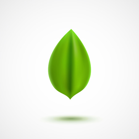 green environment: Realistic vector green leaf, environment and nature icon
