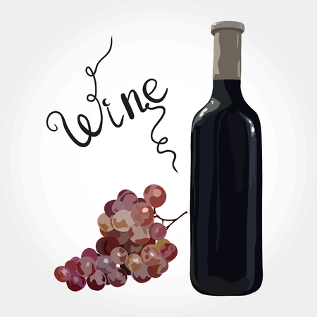 Bottle of red wine with red grapes. Vector. Watercolor imitation. Hand drawn. Wine lettering.