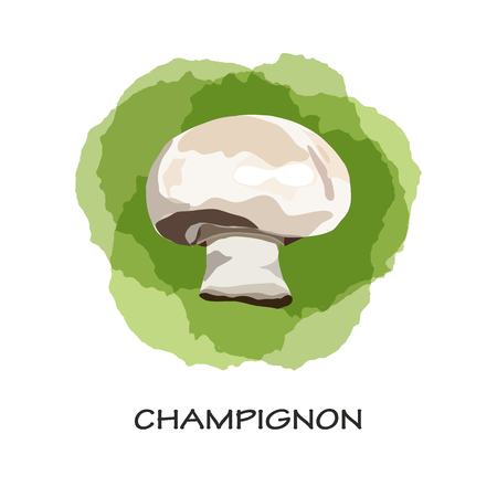 Isolated mushroom champignon on green stains background. Watercolor imitation. Hand drawn. Vector champignon.