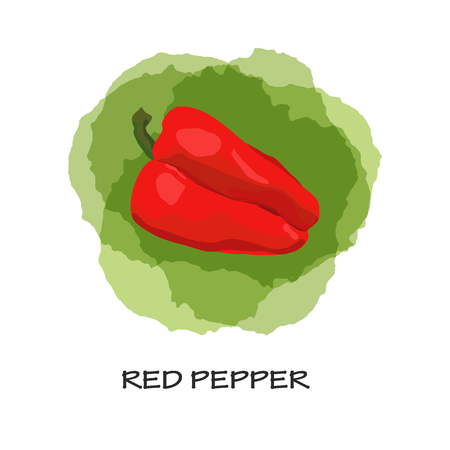 Isolated red pepper on green stains background. Watercolor imitation. Hand drawn. Vector red pepper. 向量圖像