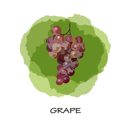 Bunch of grapes. Vector. Hand drawen grape. Watercolor imitation. Isolated bunch of grapes on green stains background. 向量圖像