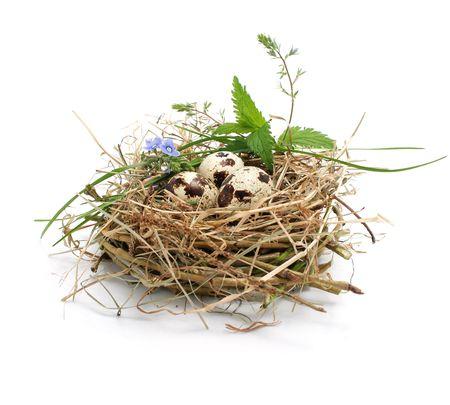 codorniz: huevos de codorniz en un nido aislado en el fondo blanco Foto de archivo