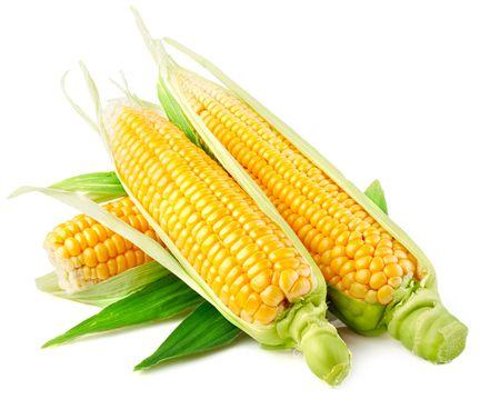 mazorca de maiz: ma�z dulce vegetales con hojas verdes aislados sobre fondo blanco  Foto de archivo