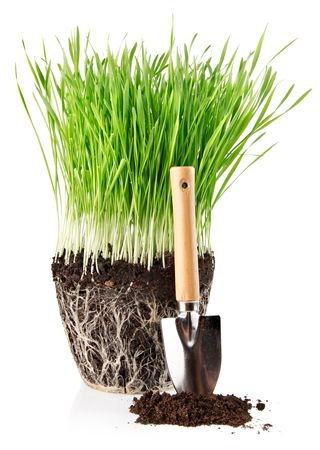 green grass with roots in ground and shovel tool isolated on white background photo