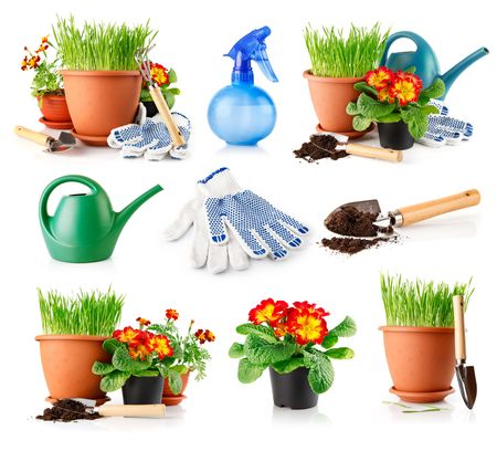 set garden grass and flowers in the pots isolated on white background photo