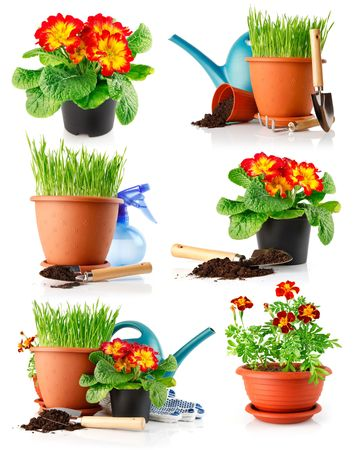 set garden grass and flowers in the pots isolated on white background Stock Photo - 6601081