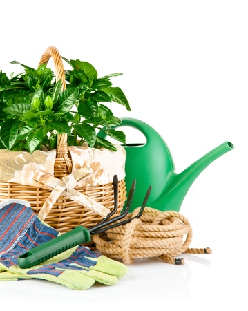 garden equipment with green plants isolated on white background Stock Photo - 9251308