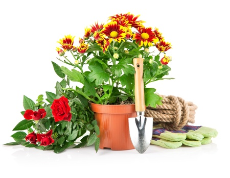 garden plants with flowers roses and equipments isolated on white background Stock Photo - 9251299
