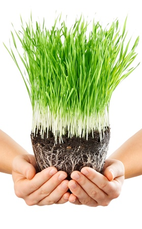 human hands holding green grass with ground isolated on white background photo
