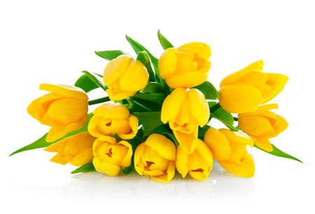 yellow tulip flowers bouquet isolated on white background