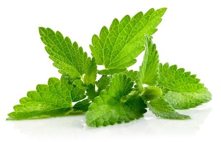 green vegetation: fresh green leaf of melissa isolated on white background