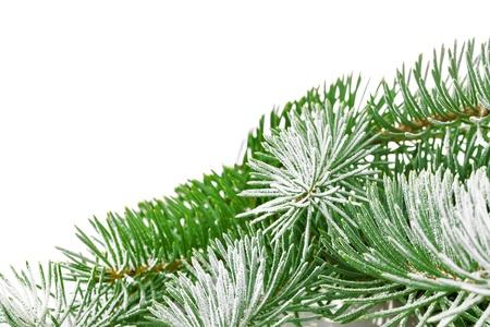 snowbound: snowbound branch of fir isolated on white background Stock Photo