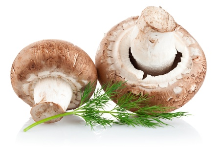 fresh mushroom champignon with twig dill isolated on white background photo