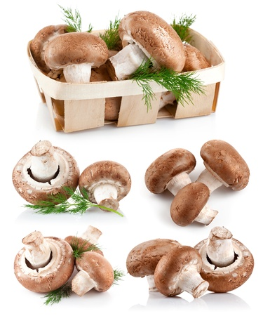 set fresh mushroom champignons with twig dill isolated on white background photo