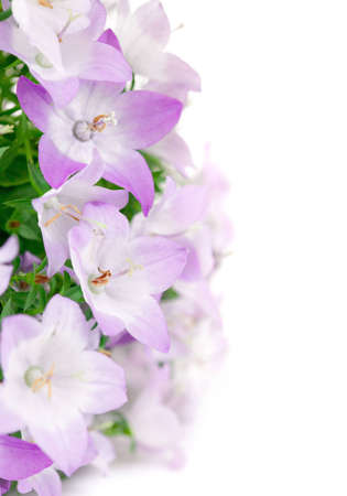 insulate: spring pink flowers isolated on white background Stock Photo
