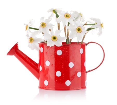 white spring flowers in red vase isolated on white background Stock Photo - 13547307