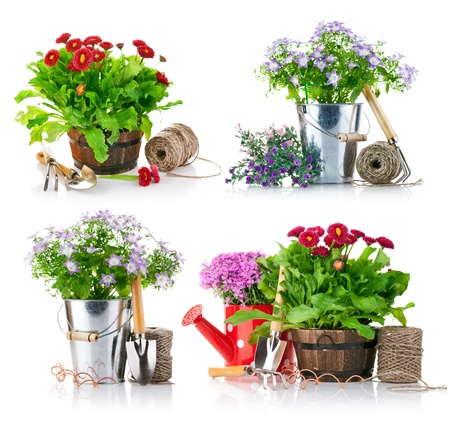 watering pot: set garden flowers with tools isolated on white background
