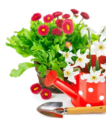 spring flowers with garden tools isolated on white background photo