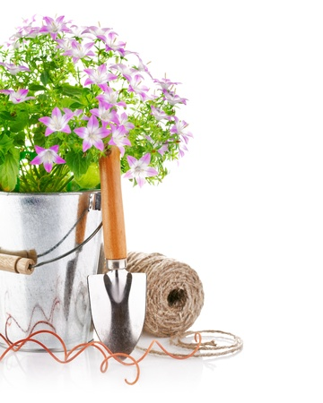 still life flowers: spring flowers in a bucket with garden tools isolated on white background