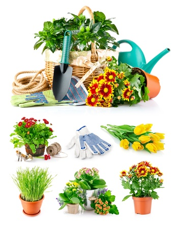 garden tool: set spring flower with garden tool isolated on white background
