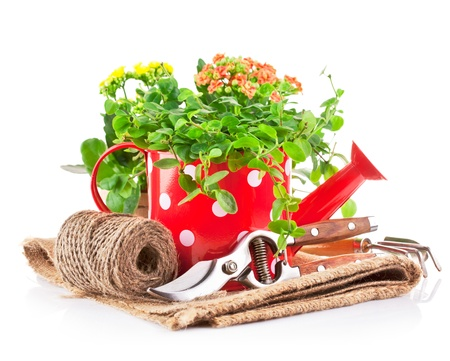 green plant in red watering can with garden tool isolated on white background Stock Photo - 17982449