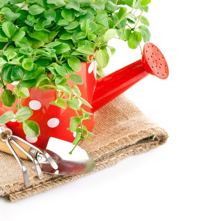 green plant in red watering can with garden tool isolated on white background photo