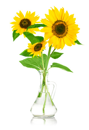bouquet flowers of sunflower in glass vase isolated on white background photo