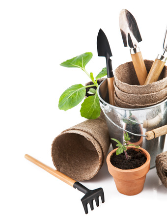 Garden tools with seedlings vegetable  Isolated on white background photo