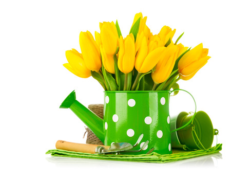 Spring flowers in watering can with garden tools. Isolated on white background photo
