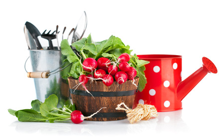 Fresh radish with garden tools. Isolated on white background photo