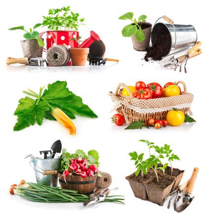 Set seedlings and harvest vegetable. Isolated on white background photo