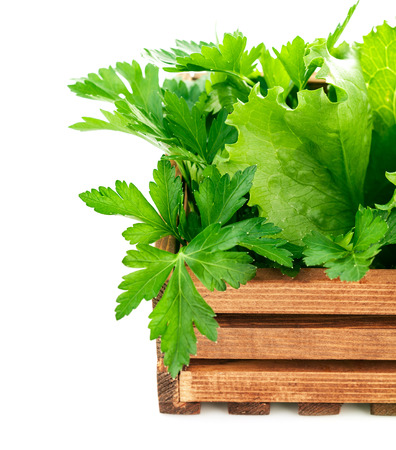 fascicle: Fresh herbs in wooden box. Isolated on white background Stock Photo