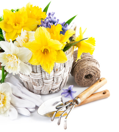 Spring flowers in basket with garden tools. Isolated on white background photo
