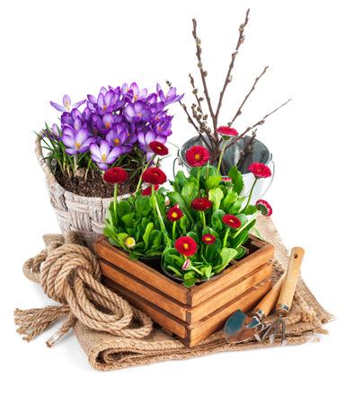 Fleurs de printemps dans un seau en bois avec des outils de jardin. Isolé sur fond blanc Banque d'images - 38739343