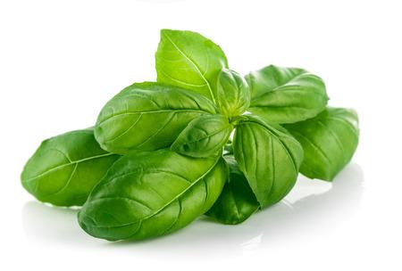 basilio: Hoja de albahaca verde fresca. Aislado en el fondo blanco