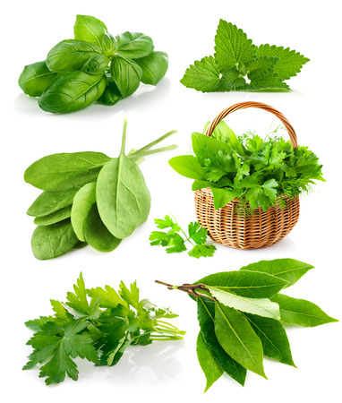 herbs white background: Set spicy herbs. Isolated on white background