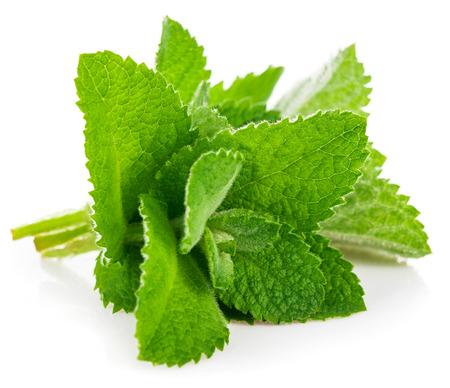 Fresh leaf mint. Isolated on white background 스톡 콘텐츠