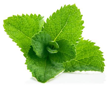 Fresh leaf mint. Isolated on white background Standard-Bild