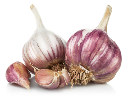 Fresh garlic in cut. Isolated on white background