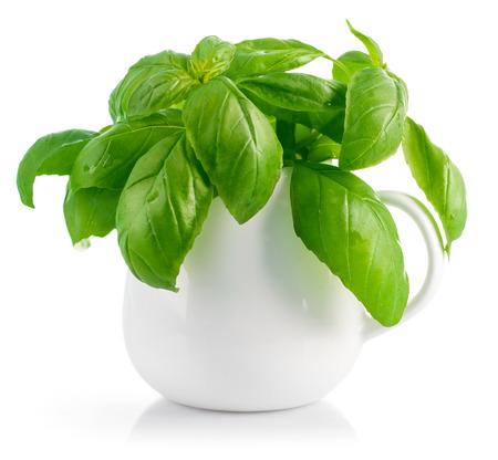 albahaca: hojas de albahaca fresca en el florero blanco. Aislado en el fondo blanco Foto de archivo