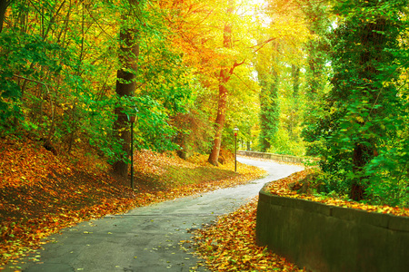 yellow trees: Track in autumnal park with yellow trees and sunny sunbeam