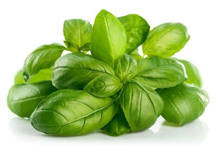 신선한 녹색 잎 바질. 흰색 배경에 고립