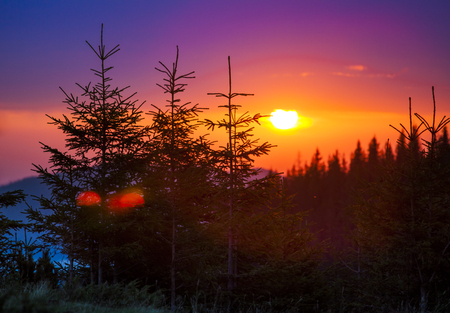 hillock: Firtrees in mountains on sunrise sun background Stock Photo